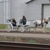 horse and carriage going to a picnic