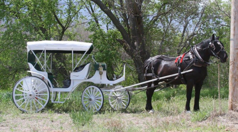 dark brown horse and white carriage ride